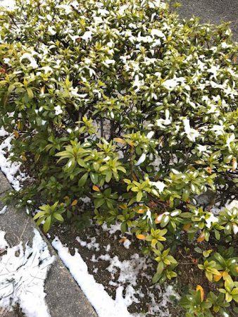 歩道の花壇も凍っています